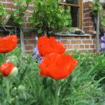 Urticahof - im Garten
